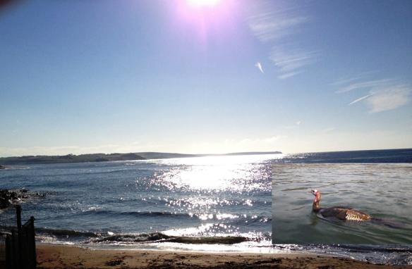 Myrtleville Turkey Swim - Dec 2, 2012 : open water - sea swimming in Cork, Ireland