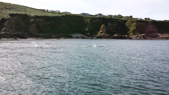 Open water, sea swimming in Cork, Ireland